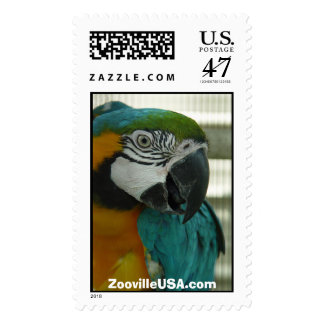 BlueGold Macaw, ZoovilleUSA.com Postage Stamp
