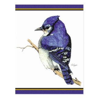 Bluejay 2 Postcard