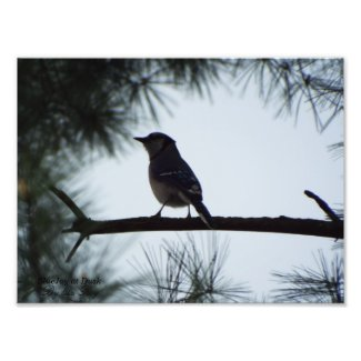 Bluejay at dusk print