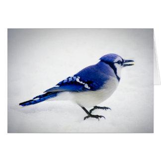 BlueJay Card