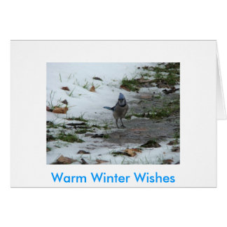 Bluejay & Cardinal, Warm Winter Wishes Card