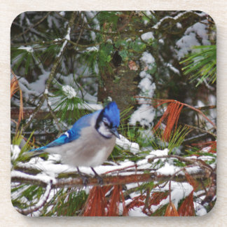 BlueJay Coaster