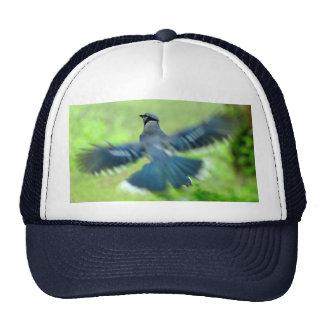 Bluejay in Flight Hat