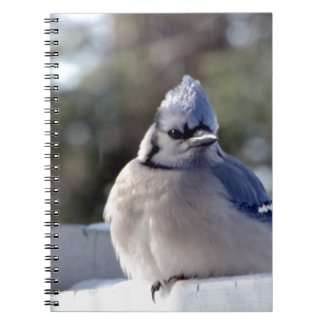 Bluejay Spiral Note Book