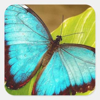 blueMorphoZ.jpg Pegatina Cuadrada