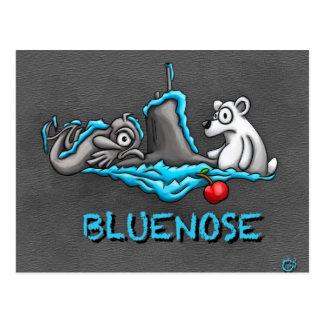 Bluenose Phins postcard