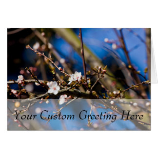 BluePhotograph - White Spring Flowers Card