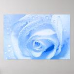 BlueRose Poster