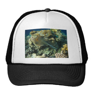 Bluespotted Ribbontail Ray Trucker Hat