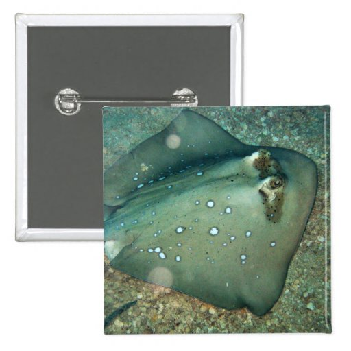 Bluespotted Stingray 2 Inch Square Button