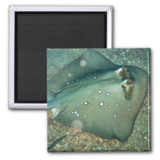 Bluespotted Stingray 2 Inch Square Magnet