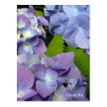 Bluest Blue Hydrangeas Post Card