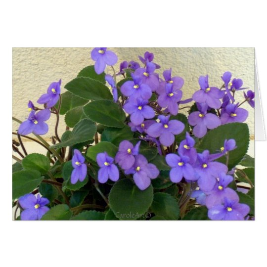 Bluest Blue Violets Card