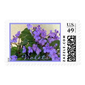 Bluest Blue Violets Postage