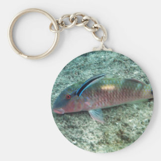 Bluestreak Cleaner Wrasse (Labroides dimidiatus) Keychain