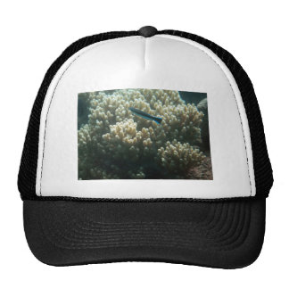 Bluestreak Cleaner Wrasse (Labroides dimidiatus) Trucker Hat