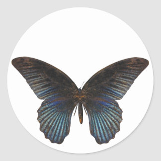 BlueSwallowTail Butterfly Classic Round Sticker