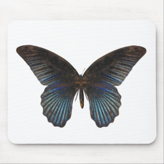 BlueSwallowTail Butterfly Mouse Pad