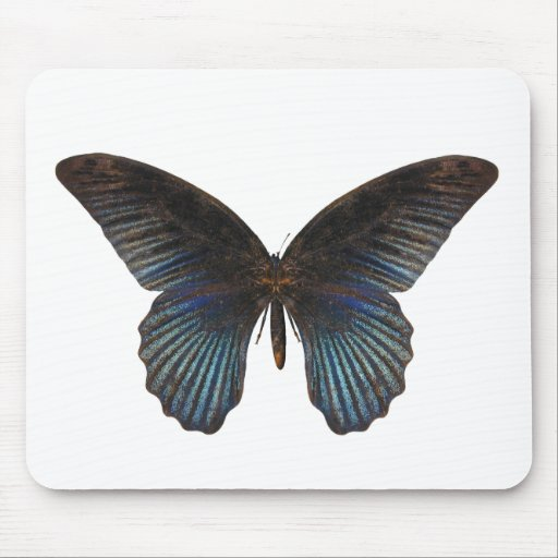 BlueSwallowTail Butterfly Mouse Pads