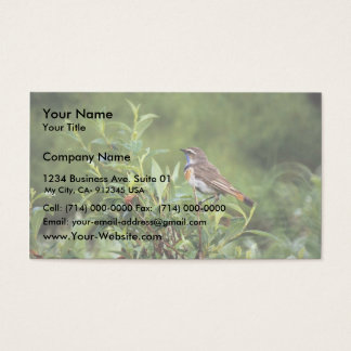 Bluethroat Male Business Card