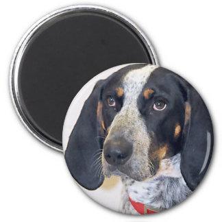 Bluetick Coonhound Photo 2 Inch Round Magnet