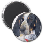 Bluetick Coonhound Photo Magnet
