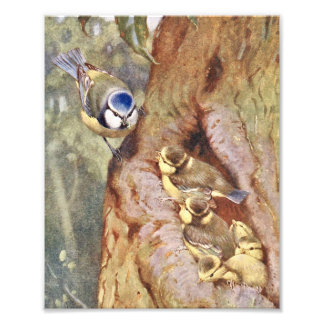 Bluetit Birds Photo Art