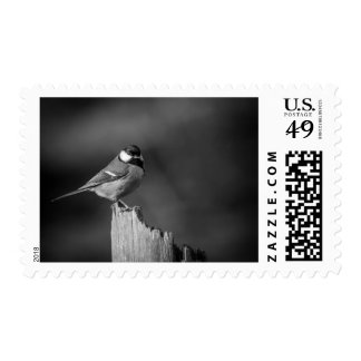 BlueTit Postage Stamp