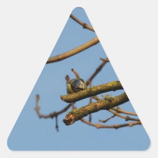 Bluetit Triangle Sticker