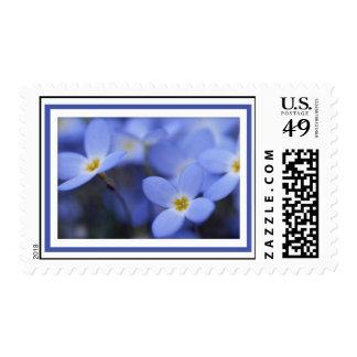 Bluettes Postage Stamp