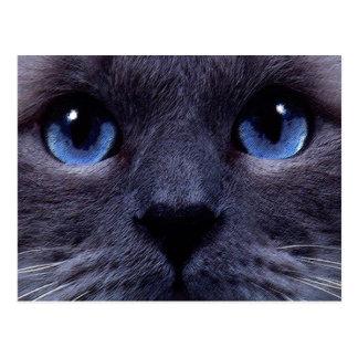 blueyes postcard