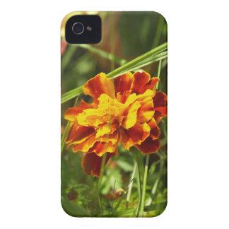 blume Case-Mate iPhone 4 cases
