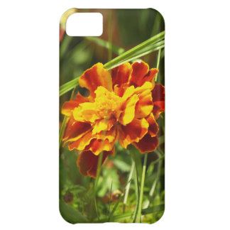 blume iPhone 5C covers