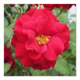 """Blume de memoria color de rosa invitación 5.25"""" x 5.25"""""""
