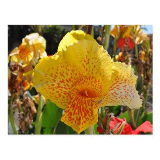 Blume Postkarten