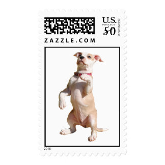 BluPrint Kennels: American Pit Bull Terrier Stamps