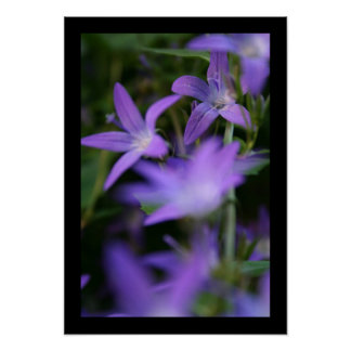 Blur - Campanula - Floral Photography Poster