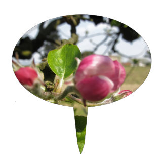 Blurred apple flower closed buds in spring cake topper