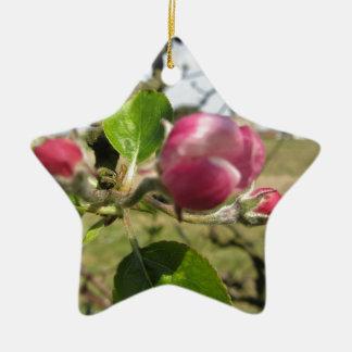 Blurred apple flower closed buds in spring ceramic ornament