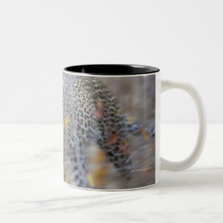 blurred motion mugs