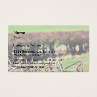 Blury Hedge Business Card