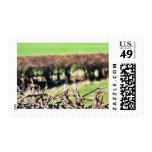 Blury Hedge Postage