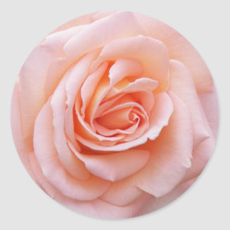 Blush Pink Rose Floral Classic Round Sticker