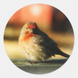 Blushing Birdie Classic Round Sticker