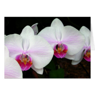 Blushing Bride Orchids Greeting Card