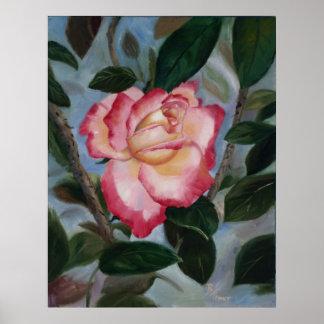 Blushing Delight Rose Poster Print