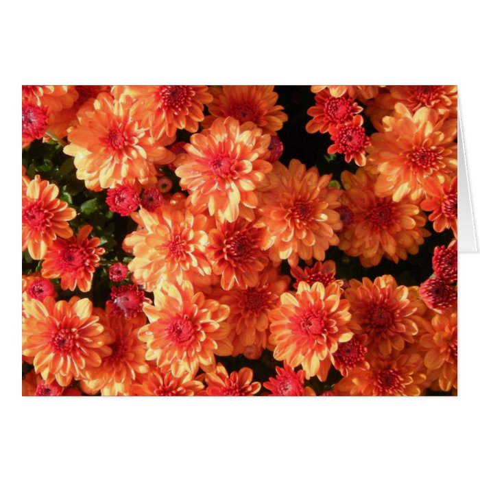 """Blushing Orange Mums"" Card"