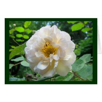 Blushing Rose card