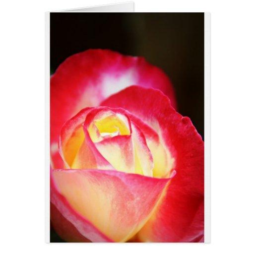 Blushing Rose No. 1 Cards