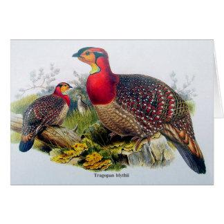 Blyth's Tragopan aka Horny Pheasant - J.Gould 1883 Card